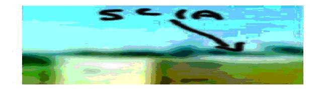 Immagine9