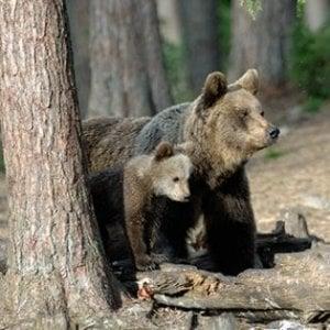 orsa e cucciolo